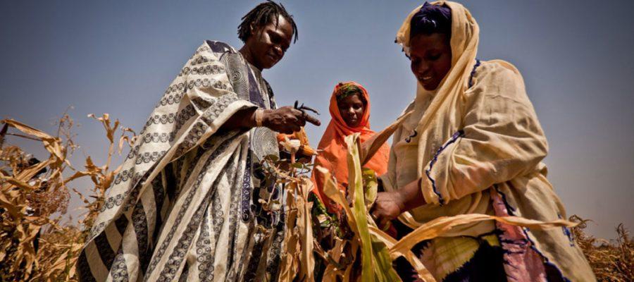 Sécheresse record et crise alimentaire dans la Corne de l'Afrique : il est possible de mieux prévoir pour agir